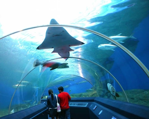 Aquarium Pattaya - GSV Travel