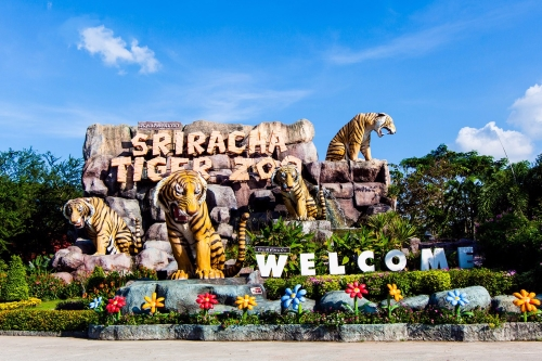 Trại Hổ Siracha Tiger Zoo - GSV Travel